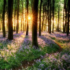 A peaceful scenery of a forest