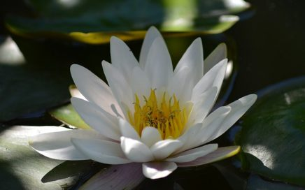 superconscious meditation