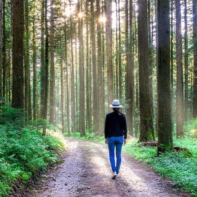 peaceful nature walk