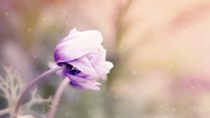 Flower calm