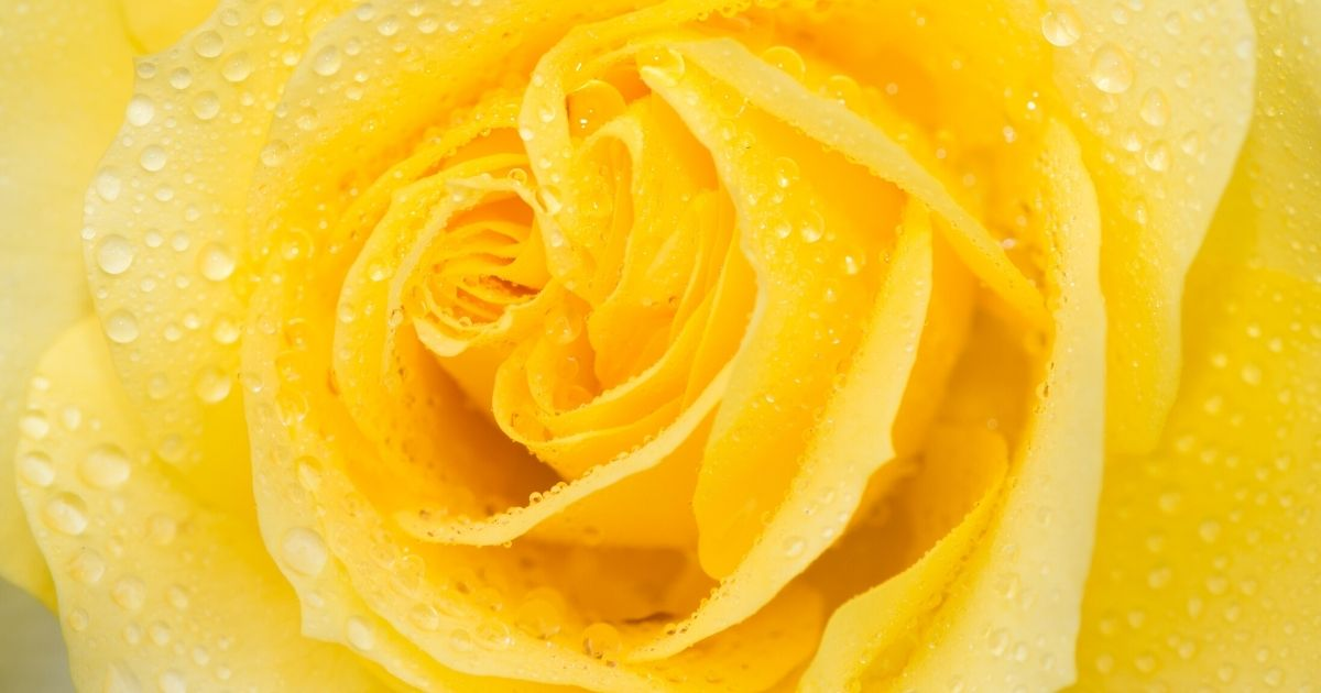 Yellow Flower - What Stirs the Heart with Divine Remembrance