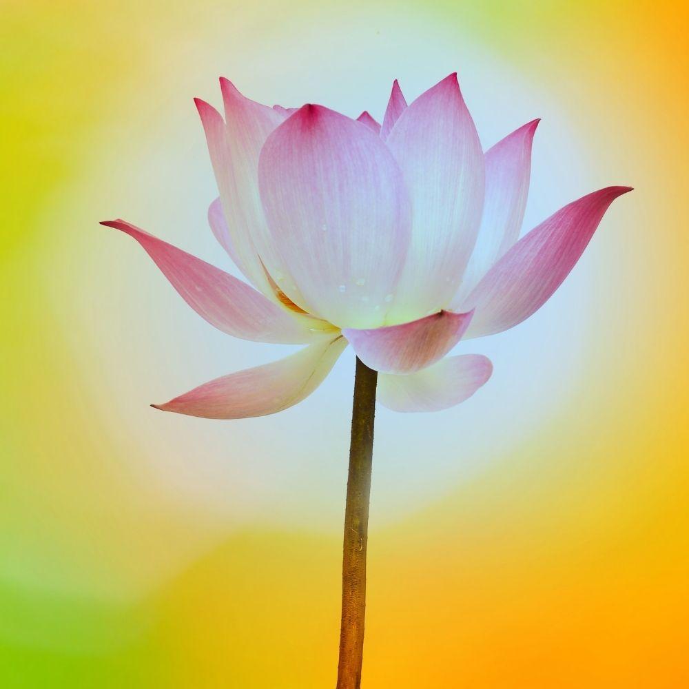 Kriya Yoga Study