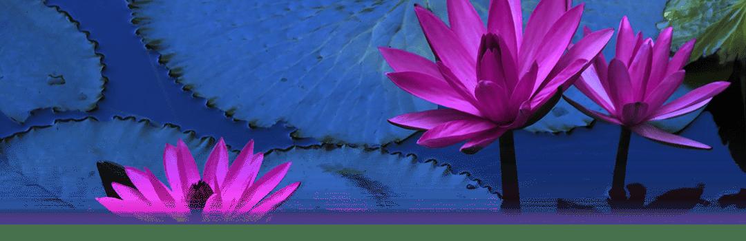 An image of Lotus plants